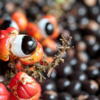 Energético, estimulante e benéfico para o coração: os benefícios do açaí com guaraná