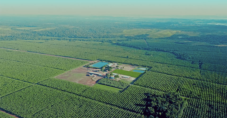 Mangal Farm