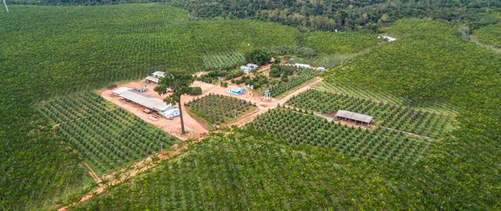 Utilização de sistema de irrigação: Açaizal Açaí Amazonas
